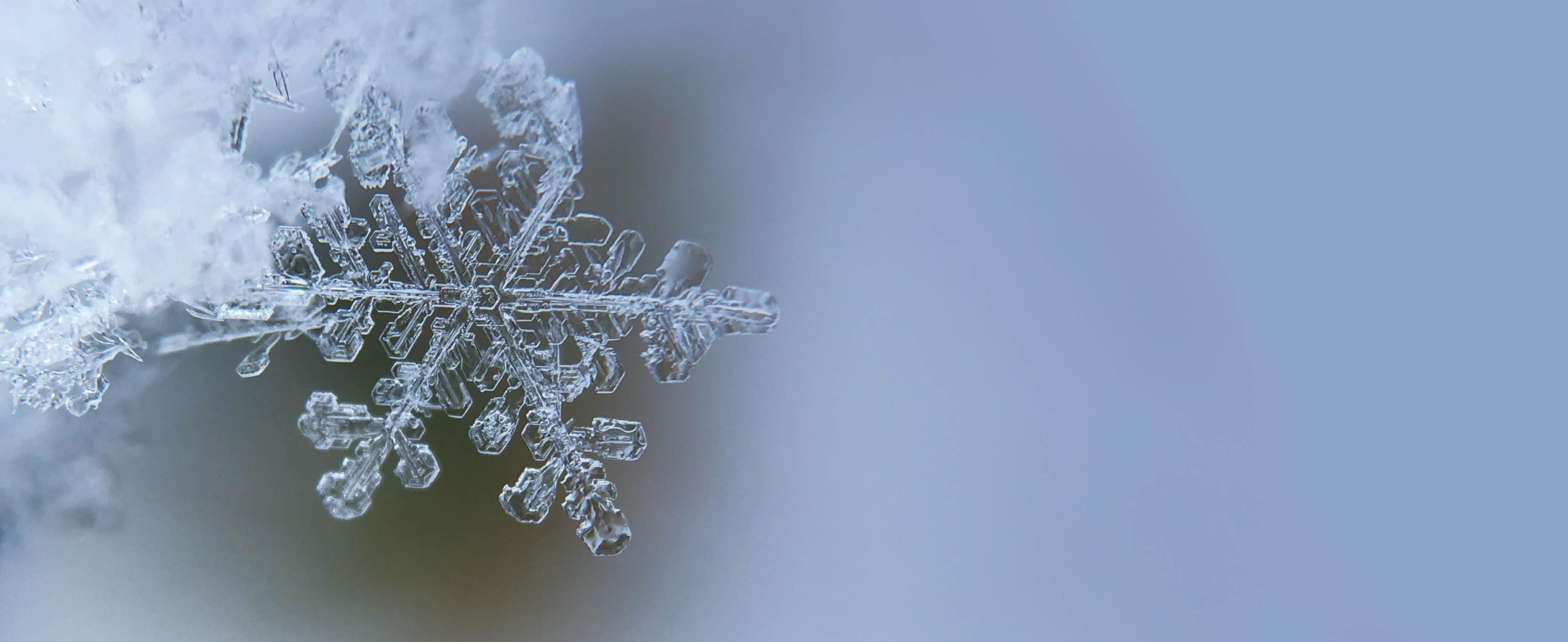 NCFADS-Winter-School-Homepage-Splash-Background